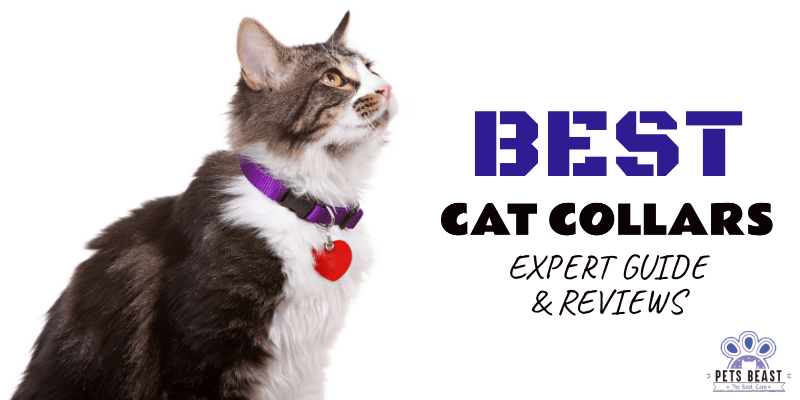 Photo of Best Cat Collars