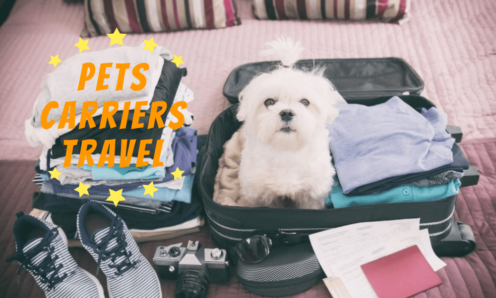 Best Pets Carriers & Travel Products