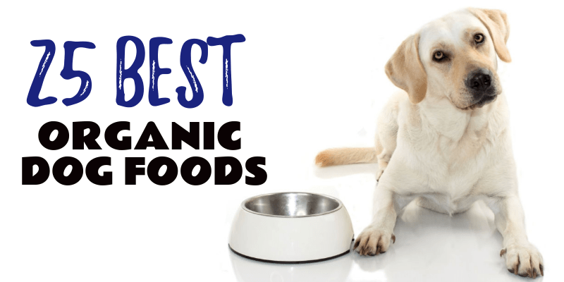 Photo of Best Organic Dog Foods