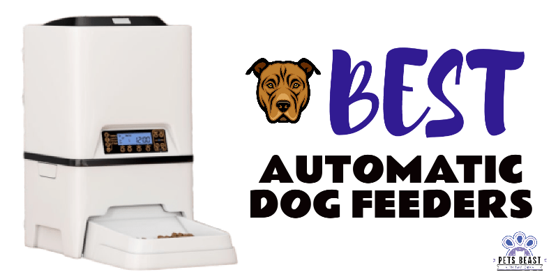 Photo of Automatic Dog Feeders