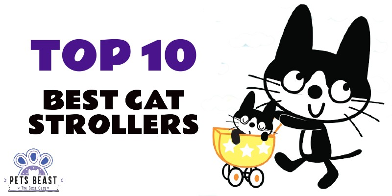 Photo of Best Cat Strollers
