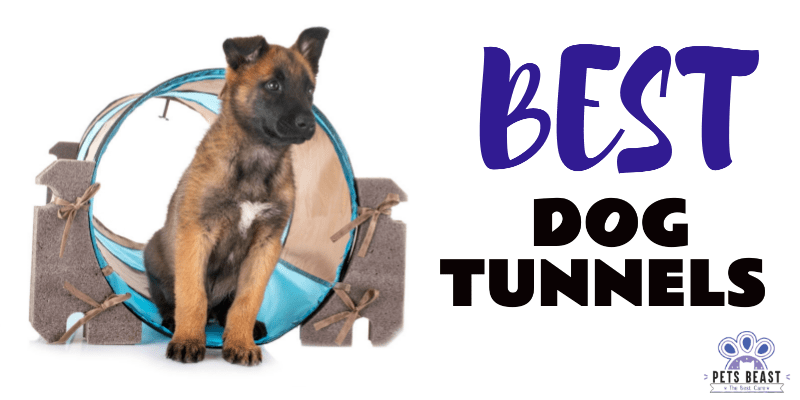 Photo of Best Dog Agility Tunnels