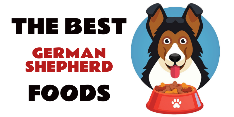 Photo of Best Foods for German Shepherd Dogs