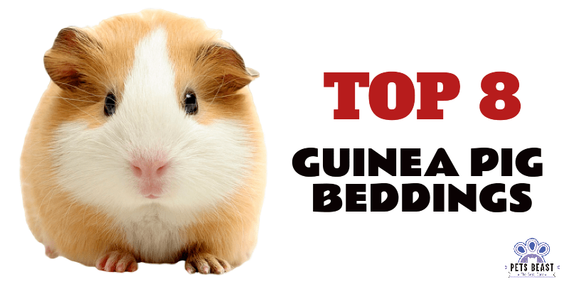 Photo of Best Guinea Pigs Bedding