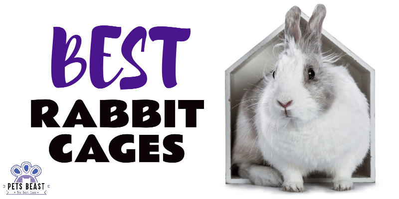 Photo of Best Rabbit Cages
