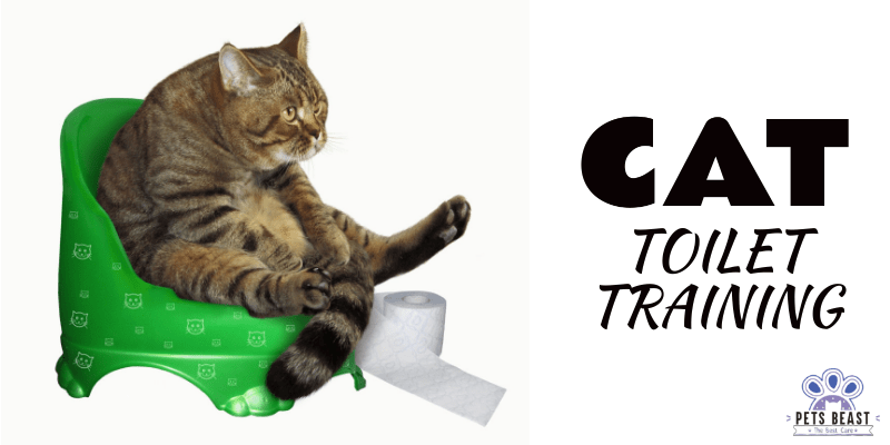 Photo of How To Toilet Train Your Cat?