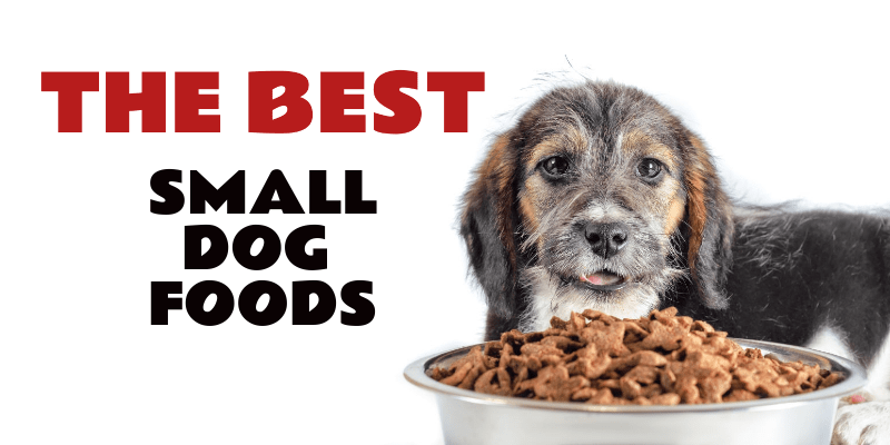 Small Dog Foods