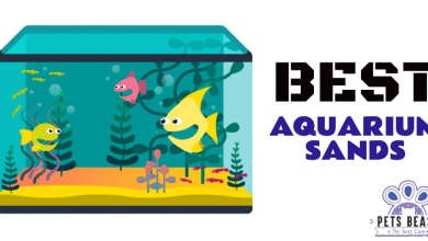 Photo of The Best Aquarium Sands (2020 Reviews)