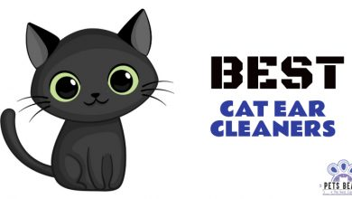 Photo of Best Cat Ear Cleaners