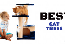 Photo of The 12 Best Cat Trees of 2020 (Reviews)