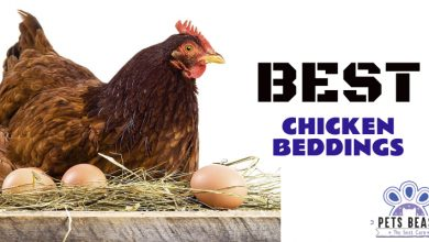 Photo of The Best Nesting Pads & Chicken Coop Beddings (2020 Reviews)