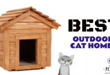 Photo of The Best Outdoor Cat Houses (2021 Reviews)