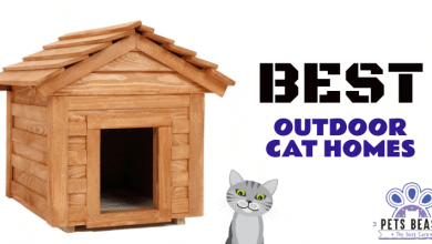Photo of The Best Outdoor Cat Houses (2020 Reviews)