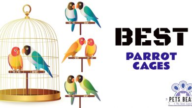 Photo of The Best Parrot Cages (2020 Reviews)