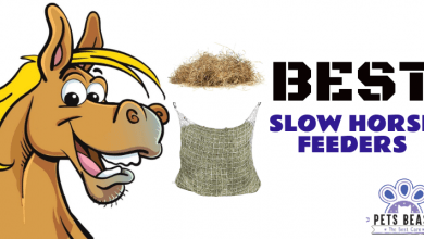 Photo of The Best Slow Horse Feeders (2020 Reviews)
