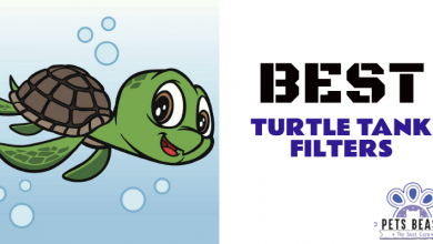 Photo of The Best Turtle Tank Filters (2020 Reviews)