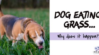 Photo of Why Does My Dog Eat Grass?