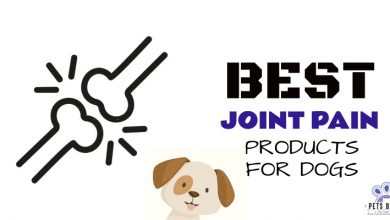 Photo of Best Dog Joint & Hip Pain Products