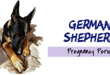 Photo of German Shepherd: Journey from Pregnancy to Delivery