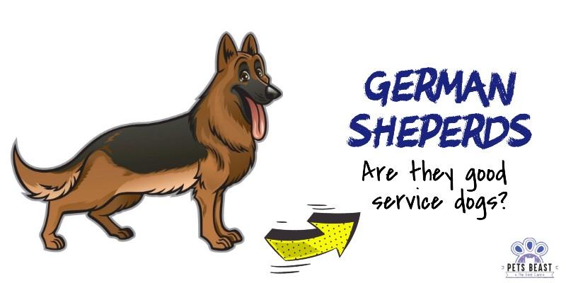 Gsd As Service Dog
