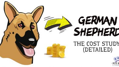 Photo of How Much Does a German Shepherd Cost?