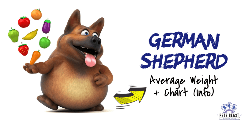 German Shepherd Weight Information