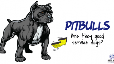 Photo of Are Pitbulls Good Service Dogs?
