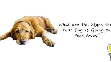 Photo of Signs That Your Dog Is Going To Pass Away + Last Minute Painless Death Remedies