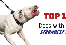 Photo of Top 15 Dogs with the Highest Bite Rates & Jaw Strengths