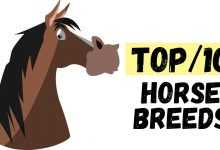 Photo of The World's 10 Best Horse Breeds