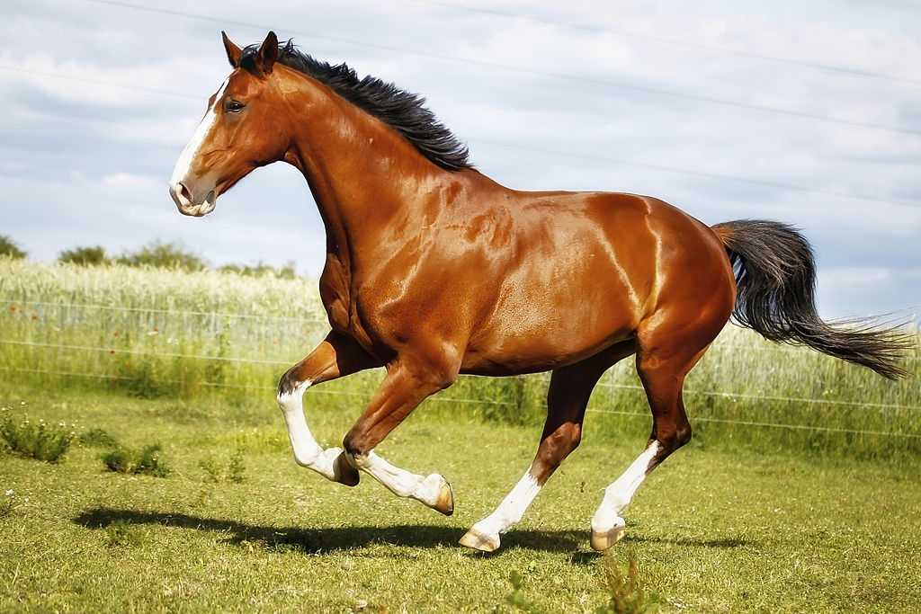 The World S 10 Best Horse Breeds These Are The Most Loyal Smartest Horses Ever