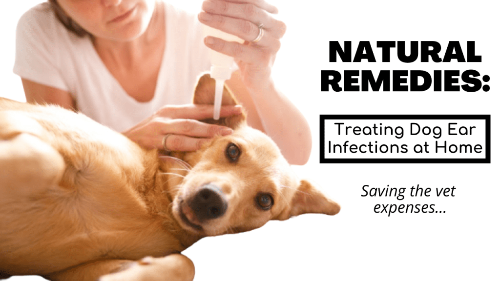 Treating Dog Ear Infections Naturally