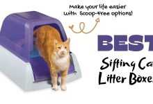 Photo of Best Sifting Litter Boxes for Cats